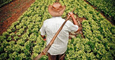 SC terá núcleo de inovação tecnológica para agricultura familiar