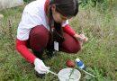 Criciúma registra aumento de focos do mosquito Aedes Aegypti