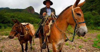 Turismo rural integra comunidade com a natureza no Sul catarinense