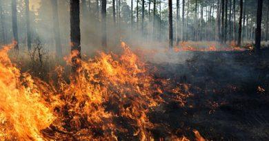 Alerta contra as queimadas em Siderópolis