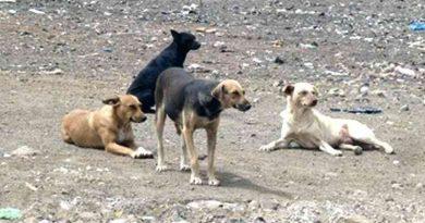 Governo vai reforçar recolhimento de animais de rua