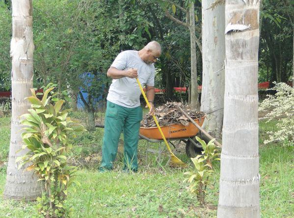 55 mil mudas já foram plantadas em Criciúma