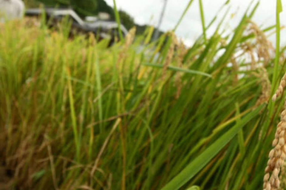 Granizo deixa prejuízos na agricultura de Meleiro