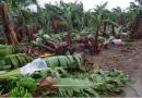 Criciúma busca soluções para agricultores atingidos por ciclone